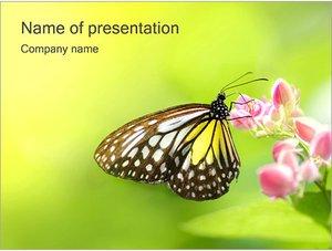Шаблон презентации PowerPoint: Бабочка на цветке