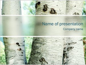 Шаблон презентации PowerPoint: Березы