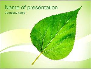 Шаблон презентации PowerPoint: Зеленый лист