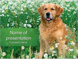Шаблон презентации PowerPoint: Собака