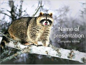 Шаблон презентации PowerPoint: Енот