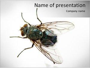 Шаблон презентации PowerPoint: Муха