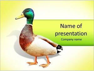 Шаблон презентации PowerPoint: Дикая утка