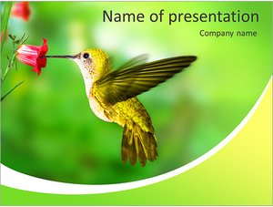 Шаблон презентации PowerPoint: Колибри