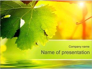 Шаблон презентации PowerPoint: Осенние листья