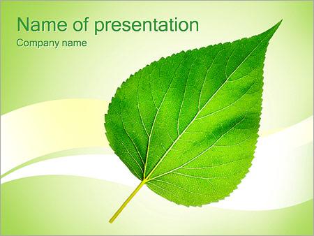 Шаблон презентации Зеленый лист - Титульный слайд