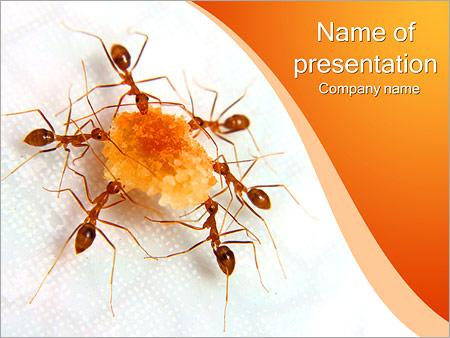 Шаблон презентации Муравьи с сахаром - Титульный слайд
