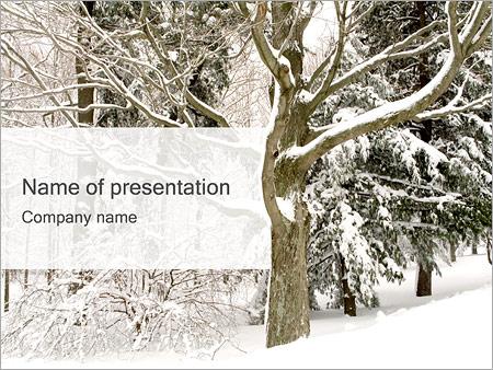 Шаблон презентации Деревья зимой - Титульный слайд