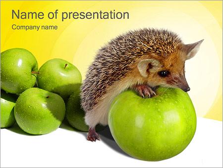 Шаблон презентации Ежик и яблоки - Титульный слайд