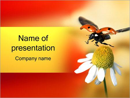 Шаблон презентации Божья коровка на ромашке - Титульный слайд