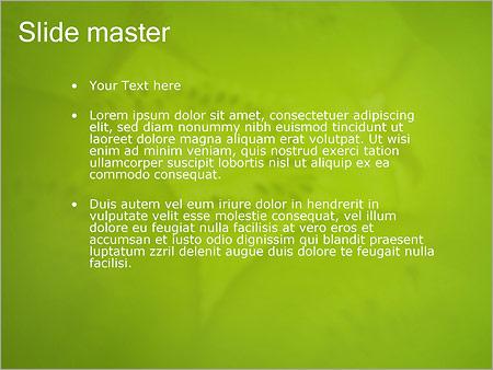 Шаблон PowerPoint Киви - Второй слайд