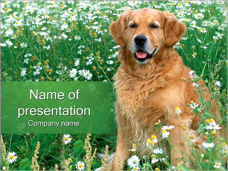 Шаблон презентации Собака - Титульный слайд