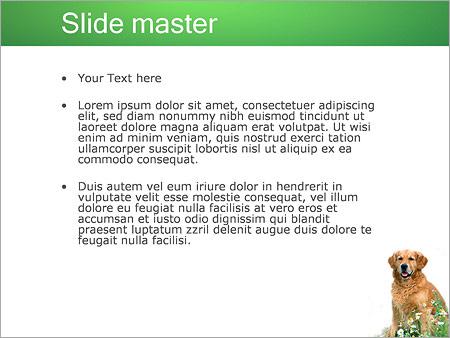 Шаблон PowerPoint Собака - Второй слайд