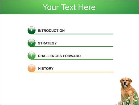 Шаблон для презентации Собака - Третий слайд