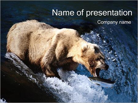 Шаблон презентации Медведь - Титульный слайд