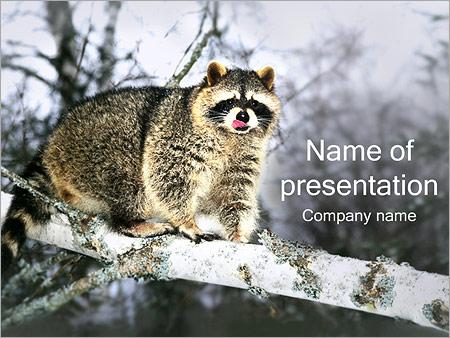 Шаблон презентации Енот - Титульный слайд