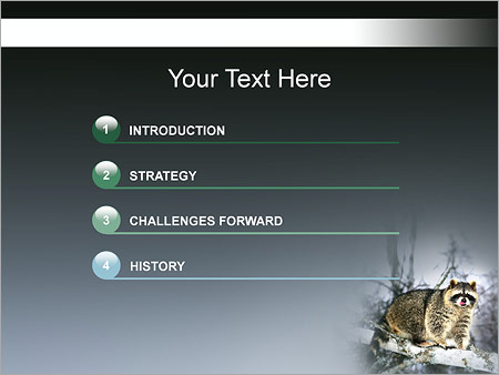 Шаблон для презентации Енот - Третий слайд