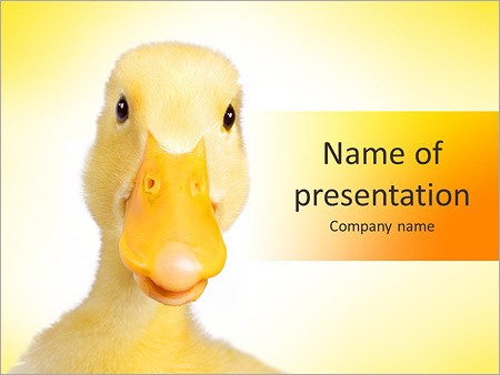 Шаблон презентации Домашняя утка - Титульный слайд