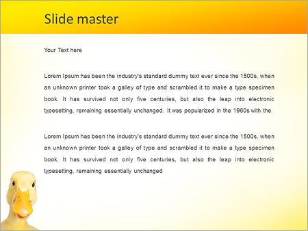 Шаблон PowerPoint Домашняя утка - Второй слайд