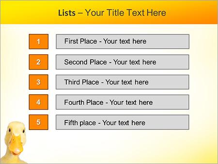 Шаблон для презентации Домашняя утка - Третий слайд