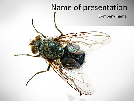 Шаблон презентации Муха - Титульный слайд