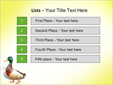 Шаблон для презентации Дикая утка - Третий слайд