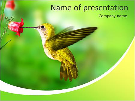 Шаблон презентации Колибри - Титульный слайд