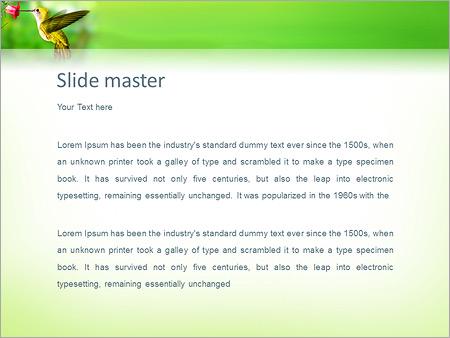 Шаблон PowerPoint Колибри - Второй слайд