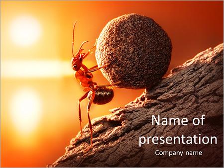Шаблон презентации Муравей поднимает тяжесть в гору - Титульный слайд
