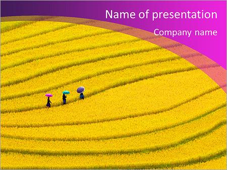Шаблон презентации Желтое поле - Титульный слайд